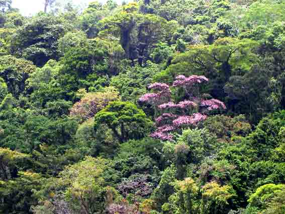 Rainforest with flowering trees
