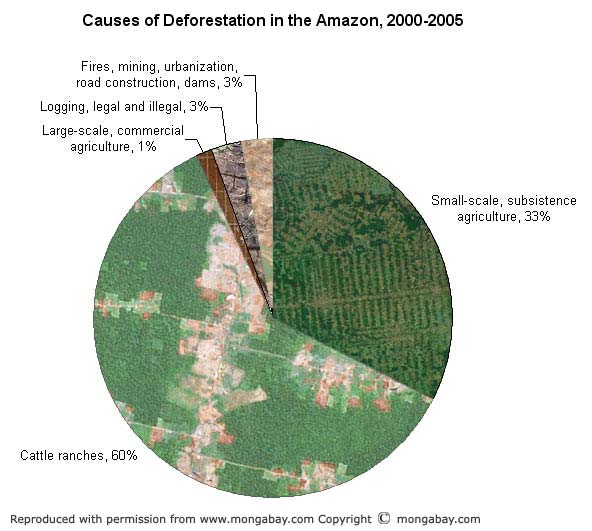 Causes of deforestation in the Amazon chart