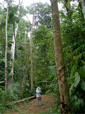 rainforest at FunaVid