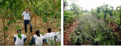 Inga lesson and pineapples in Inga alley