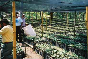 The Ecologic tree nursery