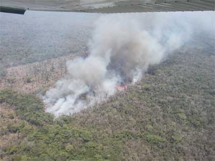 Forest burning close to the Maya Biosphere Reserve