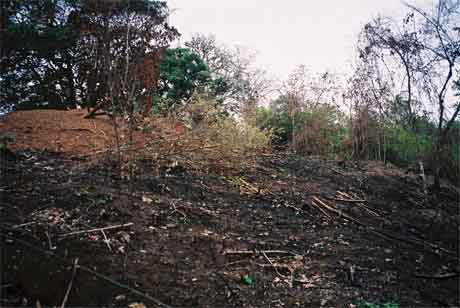 Burned slope